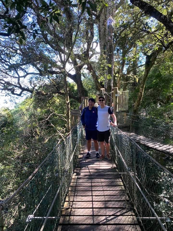 O'Reilly's Treetop walk